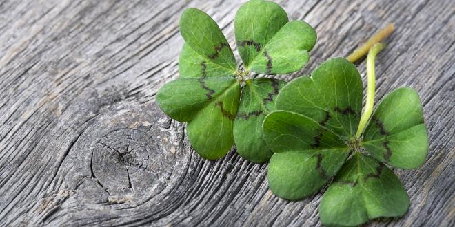 a pair of four-leaf clovers